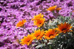 Bloemen voorjaar Portugal