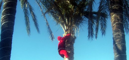 Kerstman in palmboom - Algarve